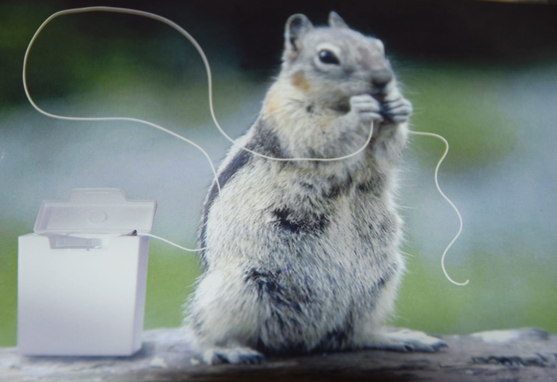 squirrelflossing